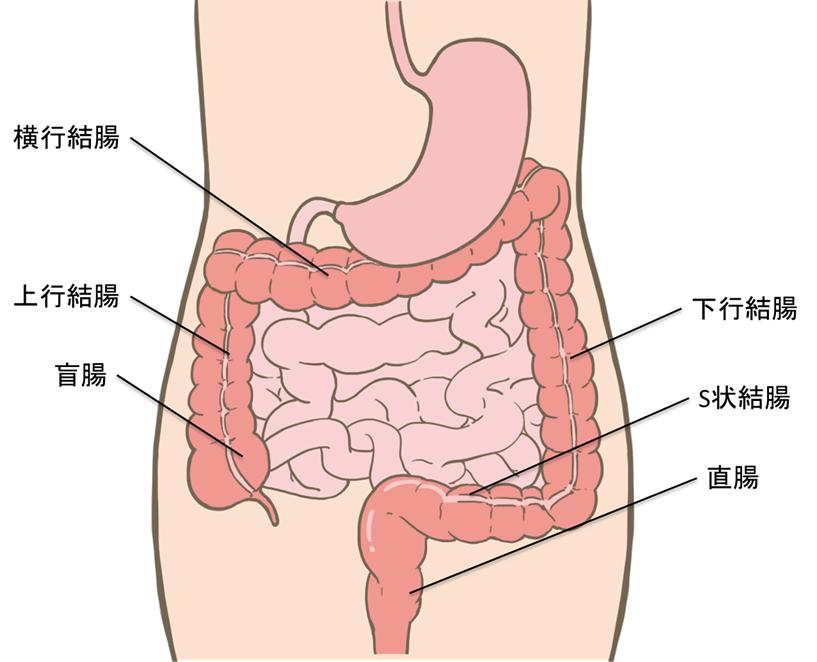 腸画像中から